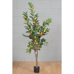 Pianta Arancio 150 cm. 30 frutti