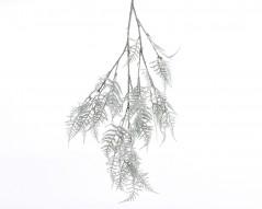 Filo Asparagus Branch Snow Verde