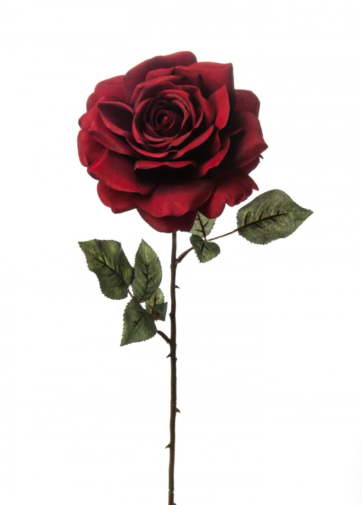 Rosa Madonna Rossa