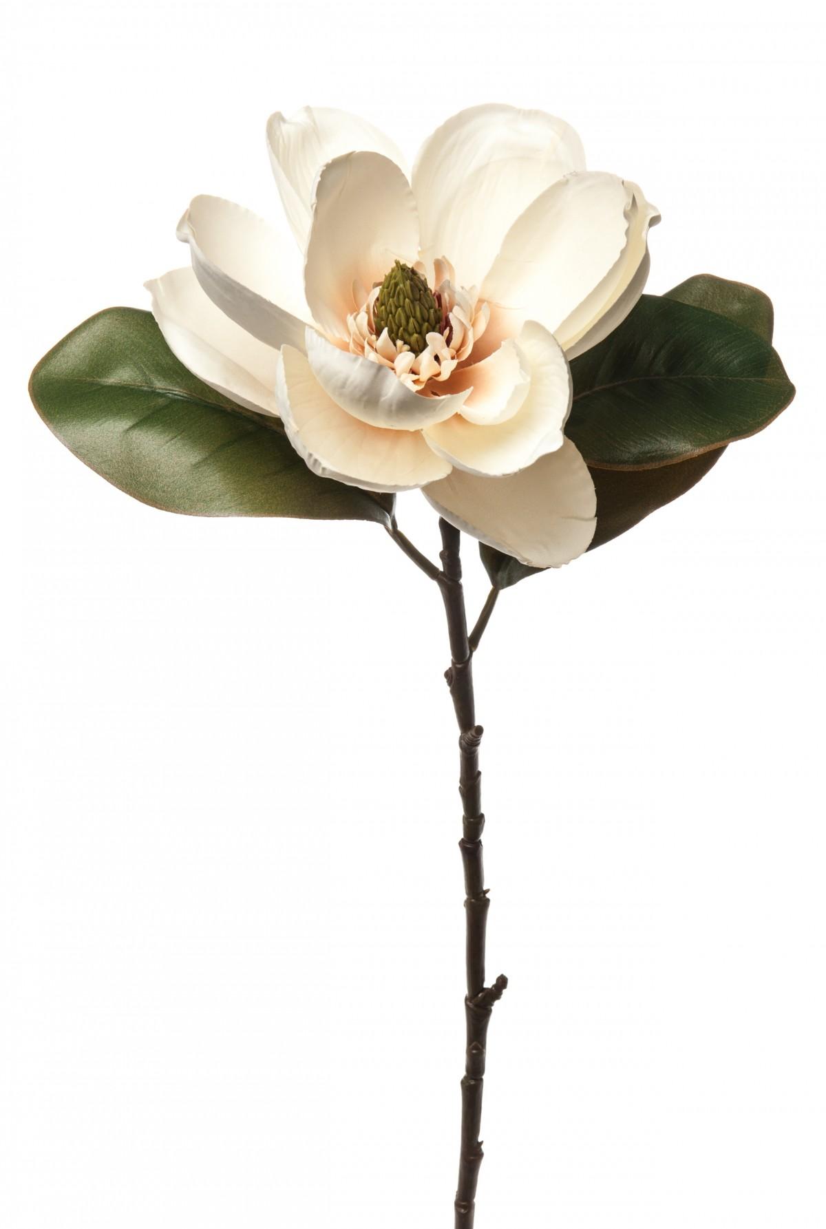 Magnolia Champagne