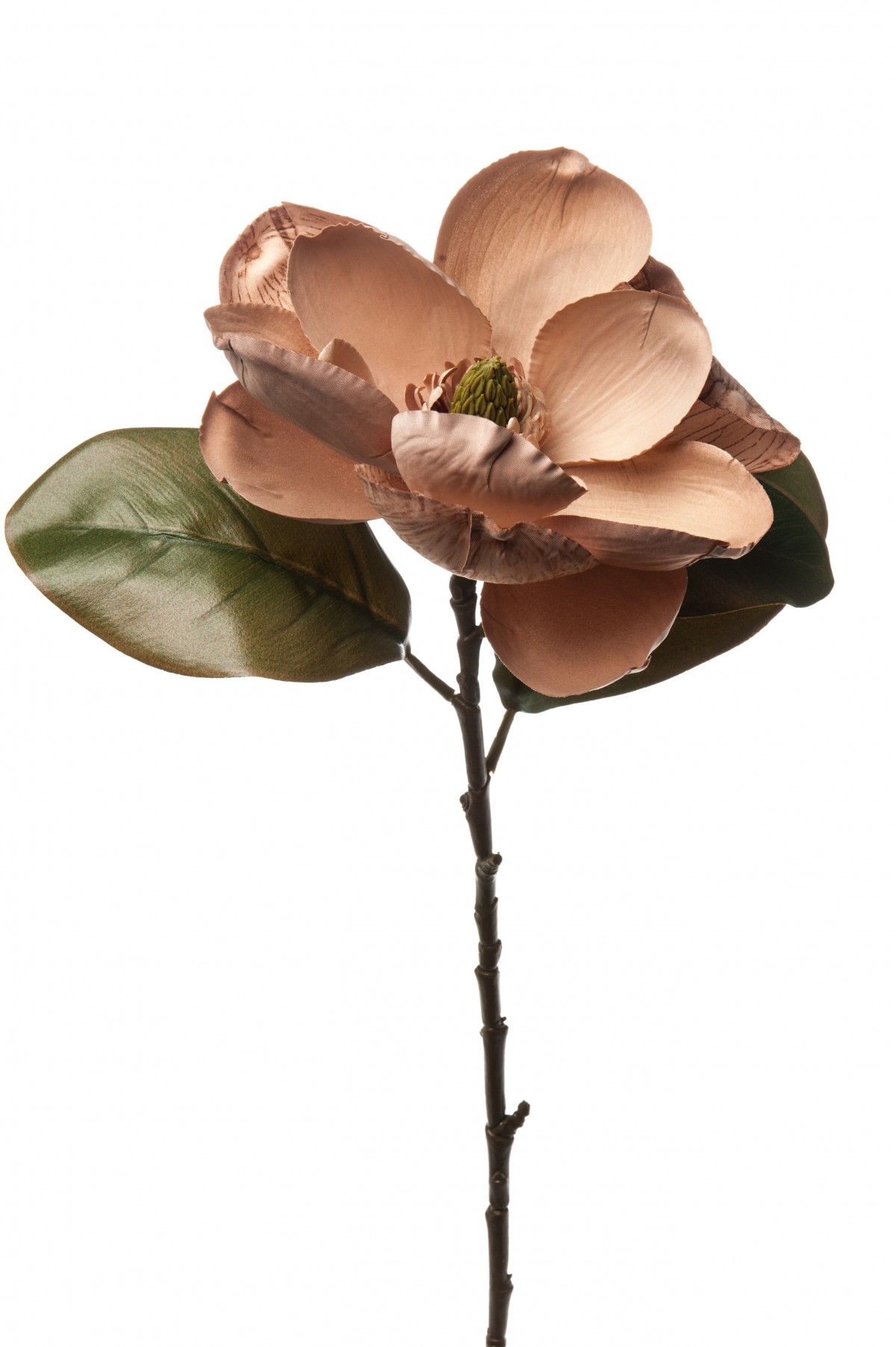 Magnolia Beige