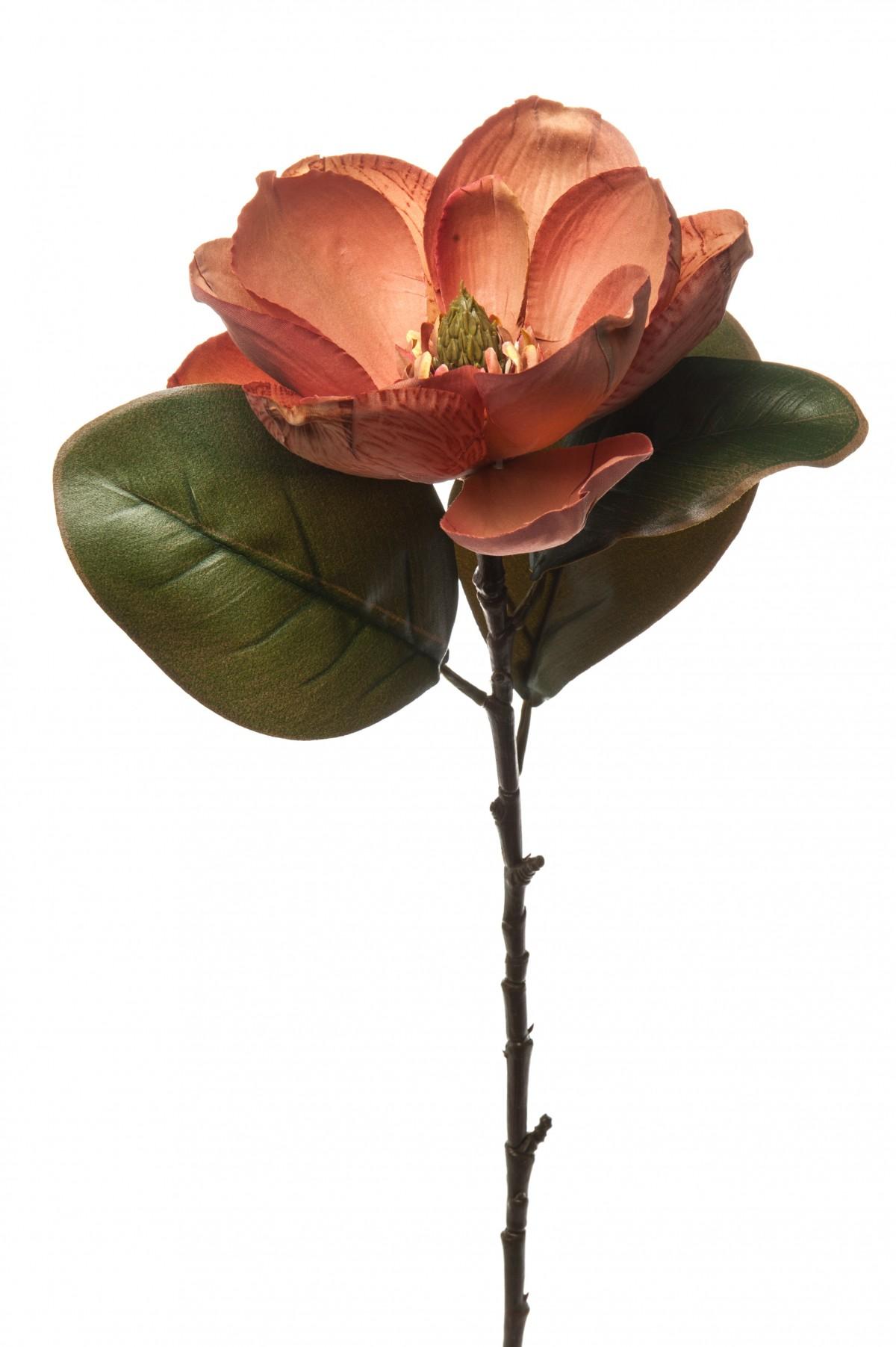 Magnolia Ruggine