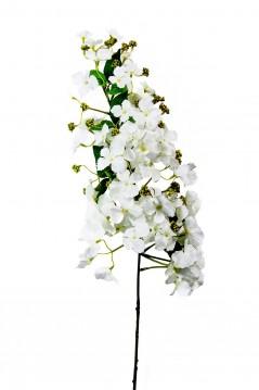Ortensia conica bianca