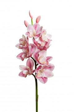 Orchidea 8 fiori e 3 boccioli bianco
