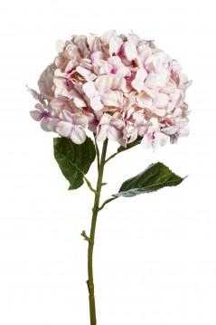 Ortensia grande rosa chiaro