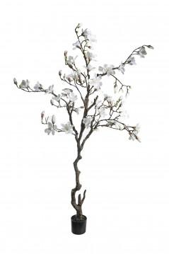 Pianta di Magnolia cm 210 bianco