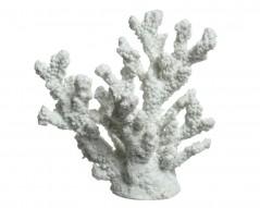 Corallo bianco cm 8,5 x 16,5 x 17