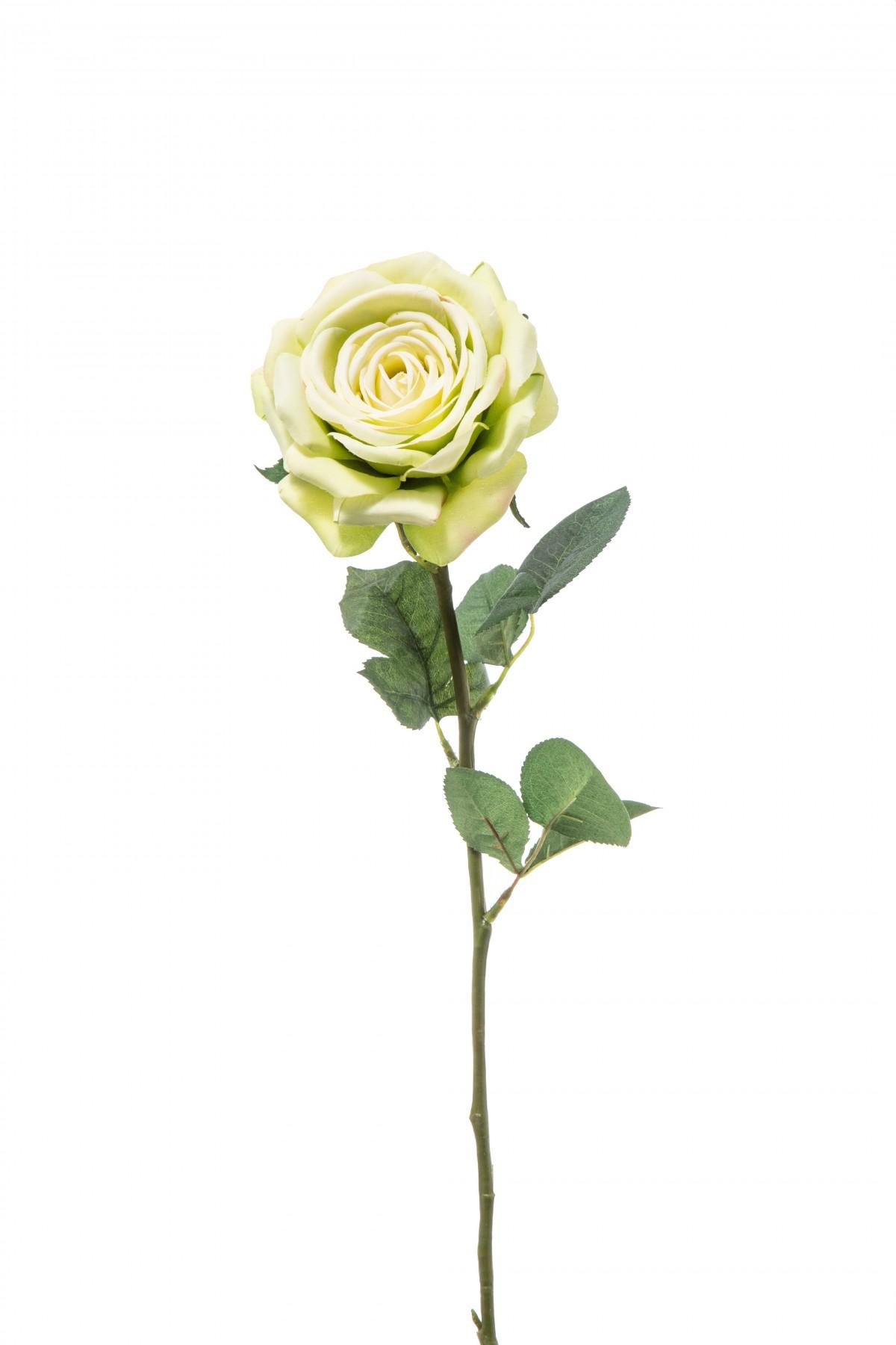Protea Fiore