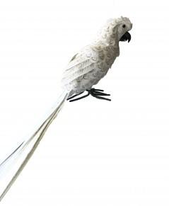 Pappagallo Bianco coda lunga