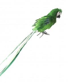 Pappagallo Verde piccolo