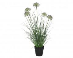 Pianta Allum Flower Cm 74